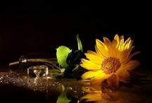 Flowers - Kwiaty / by Teri P.