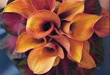 colores / imágenes elegidas por sus combinaciones de color.
