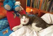My cat / The Boy Named Sue / by AlexandraJamieson.com