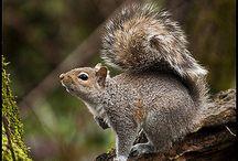 Eekies /squirrel