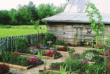 Vegetable Garden Design / by Barb: Frugal Local Kitchen