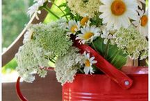 fiori e casette
