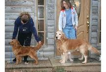 Dogs / by Christy Schakel