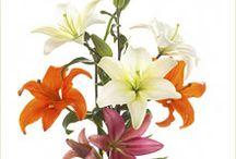 çiçek Esarp icin