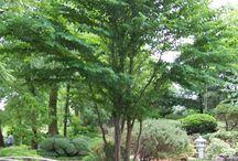 större buskar och träd > 3 m