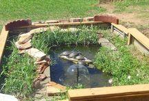 Turtle ponds