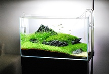 Aquascape / by Kevin Liew
