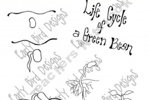 Science Life Cycles / by Lori-Ann Lingley
