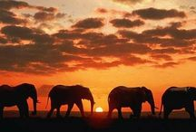 I heart Africa / All things Africa(n)!