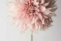 bloemen / dieren / mooi bloemen en leuke en schattige dieren
