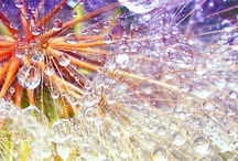 amazing...drips, drops & dew... / amazing photos of water droplets / by Debbie Young