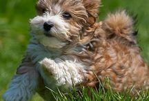 dog / by KarenFaye Dobies