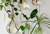Planten/bio