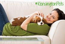 #KensingtonPets / Share pictures of your pet in your Kensington apartment with the hashtag #KensingtonPets on Facebook (www.facebook.com/thekensingtonapts), Instagram (@thekensington), or Twitter (@livekensington) and we'll post them here too!