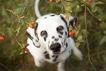 Pets Photography / Quem me conhece sabe da minha paixão por cachorros, é de sempre para sempre!!!