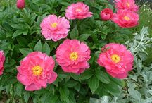 Plants for a sunny, narrow border / Plants for a border that is 2½ft wide (0.76m)