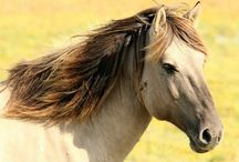 HORSE CARE / All details about Horse caring