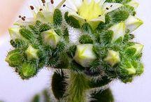 Цветы суккулент