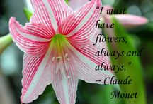 Flowers and Quotes / Images of flowers with quotes