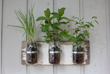 Easy Garden / Solutions for the inexperienced gardener. Ideas for outside and inside-the-home greenery. Let your green thumb shine no matter where you live!