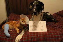 dog shame....hehe