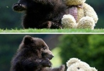 Beary Funny! / by GUND