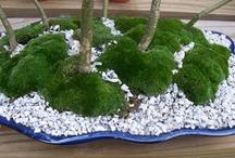 Creative garden / Moss