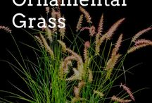 ❀ Ornamental Grass / How to plant, care and get rid of Ornamental Grass