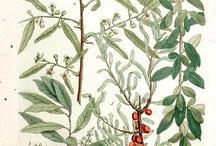 botaniczne