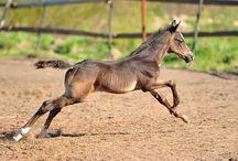 Amazing Horses / About horses!
