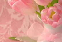 Tulips rose