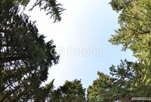Forest backgrounds / Flowers,tree, life in forest, backgrounds pictures Istock and fotolia