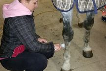 Equine Ultrasound Therapy
