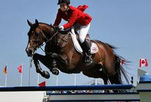 showjumping / Professional showjumpers