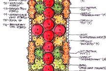 Grønnsaker i bedbeplantninger.