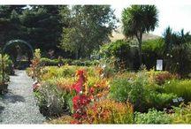 Gardening - Hawkes Bay / Nursery Taradale