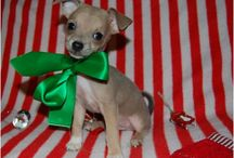 Holiday Pet Tips / Holiday pet tips for pet owners and pet sitters or dog walkers