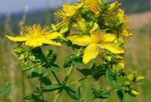 Feraspis / Αρωματικά/Φαρμακευτικά φυτά και βότανα Βιολογικής καλλιέργειας