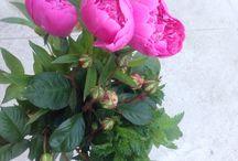 Мои цветы -flowers