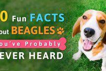 beagle :x