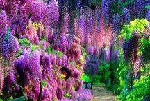 Ogrody\Kwiaty