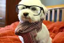 Hipster Dog / Hipster Dog is one cool puppy.