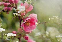 Flower*.*