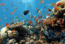 Faune marine de La Réunion