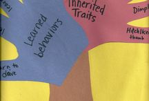 Inherited Traits/Learned Behaviors / 5th Science / by Amy Williams