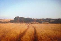 TASMANIA: Off the road & off the grid / Falling for bushrangers...x