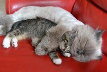 Cutest Animals...♡♡♡
