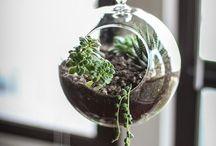 plantas y vidrio