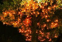 Lights for soft event / wedding lights, luminarie, illuminazioni per eventi