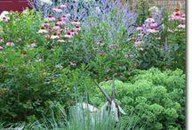 Gardening / by Teresa Cox-Cook